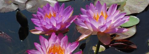 15.000 plantes rares à la foire de Gaujacq dans les Landes