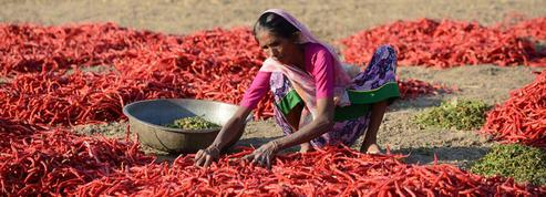 L'Inde soutient ses 270millions de paysans en crise