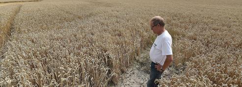 La sécheresse va s'accentuer en France avec le réchauffement climatique