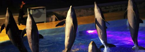 Parcs aquatiques : l'interdiction de la reproduction des cétacés maintenue