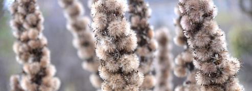 Les émouvantes silhouettes des plantes de l'hiver