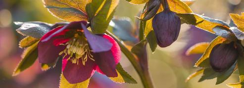 Des idées pour un jardin fleuri et coloré cet hiver