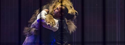 Cirque : les fauves sur le gril