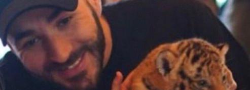 Benzema recadre Laurence Parisot après la polémique sur le bébé tigre