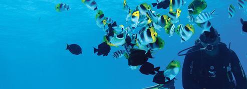Évasion sous-marine, le phénomène