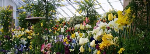 Plantes à fleurs : la fin de «l'abominable mystère» de Darwin ?
