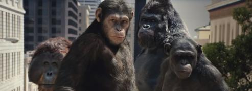 Quand les singes s'échappent et sèment la pagaille au cinéma