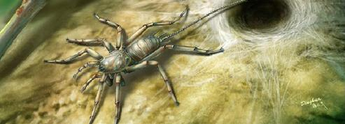 D'étonnantes araignées possédant une queue découvertes en Birmanie