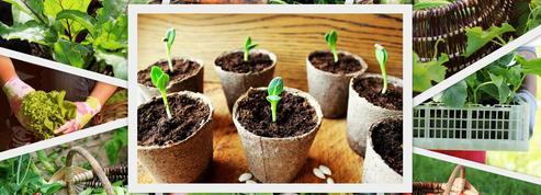 Des légumes «paresseux» à semer dès maintenant