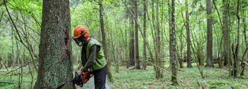 Forêt de Bialowieza : la Pologne s'expose à une condamnation