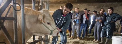 La bonne santé des lycées agricoles