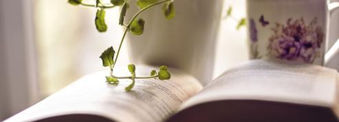 Les meilleurs lieux pour s'adonner à la lecture