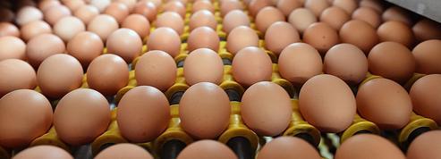 Bientôt des œufs vendus sous le label «made in France»