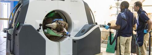 Première mondiale : un rhinocéros noir passe au scanner