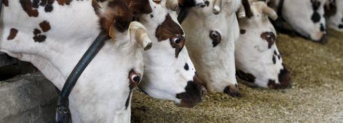 Le préfet bloque le projet de la ferme aux 4000 bovins de Digoin