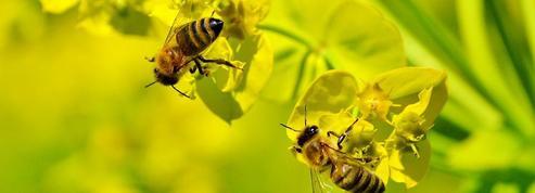 Des ruches dans les cimetières parisiens