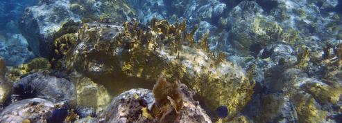 Ces innovations majeures permises par les ressources minérales et biologiques des mers françaises
