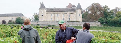 En Bourgogne, on vendange les raisins de la réinsertion