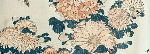 Les surprenants chrysanthèmes du Japon enchantent Pierre Loti en 1891