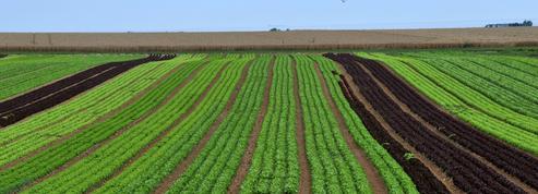 En France, les pesticides au métam-sodium définitivement interdits