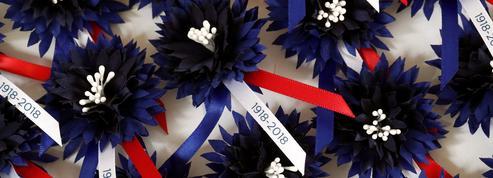 11 novembre:le Bleuet, cette fleur symbole, qui poussait sur les champs de bataille
