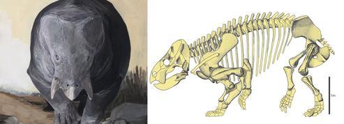 Une espèce géante mi-reptile, mi-mammifère au temps des dinosaures