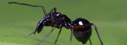 Cette araignée étonnante fabrique du lait pour nourrir ses petits
