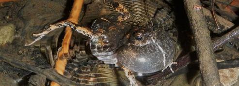 Les grenouilles des villes plus sexy que les grenouilles des champs