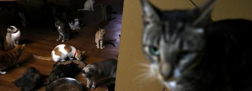Une start-up lance des croquettes pour chiens et chats à base d'insectes