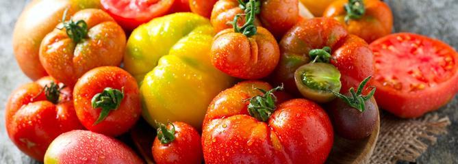 Tomate, la reine du potager