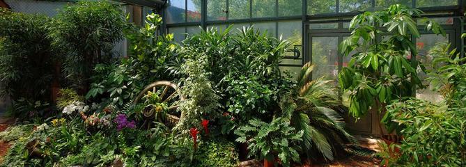 Comment cultiver des plantes tropicales sous une serre?