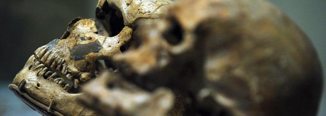 Néandertal avait déjà découvert l'aspirine