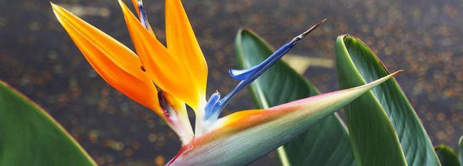 «Jardinez-vous !»: comment réussir la culture des plantes tropicales