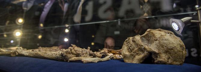 Le squelette du plus ancien ancêtre de la famille humaine, Little Foot, enfin dévoilé