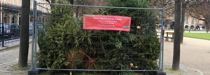Recyclage: où jeter son sapin de Noël à Paris?