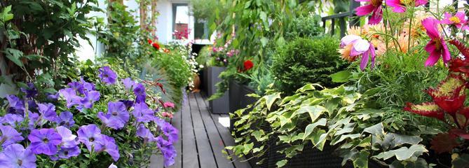 Comment aménager un jardin sur son balcon