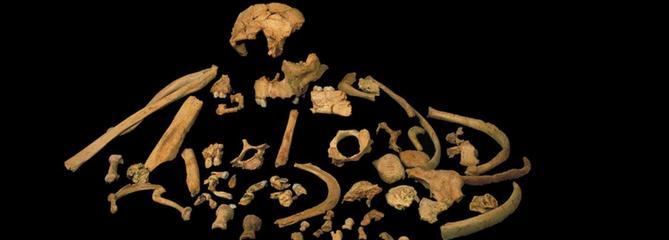 Le premier Européen, Homo antecessor, a au moins 800.000 ans