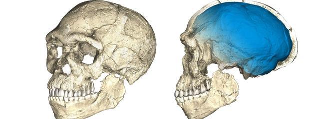 Notre ancêtre Homo sapiens n'est pas issu d'une seule population africaine