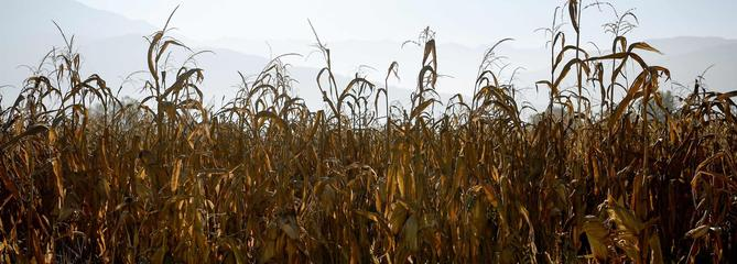 Avec cette sécheresse qui dure, les agriculteurs appellent à l'aide