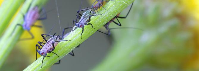 Comment le savon noir élimine les insectes?