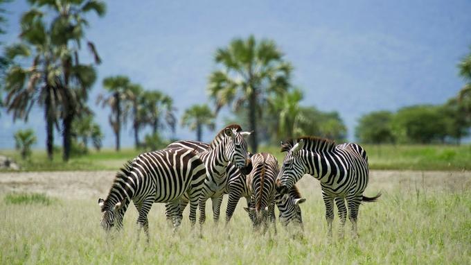 Jadis la concession était réservée à la chasse. Depuis que cette zone est protégée, les animaux ont réapparu et y évoluent en confiance.