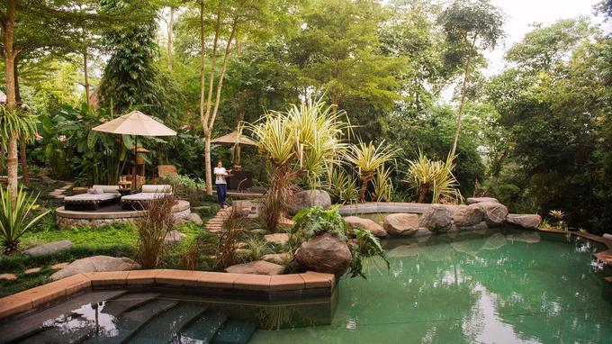 Les éléphants de la fondation ont leur piscine ... Les hôtes du Four Seasons aussi!