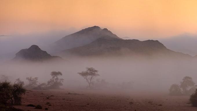 Au petit jour, une brume côtière pénètre profondément à l'intérieur des terres et transcende les paysages.