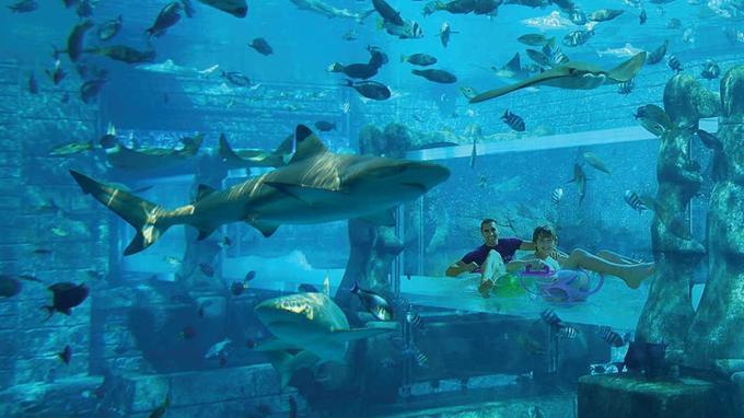 À l'Aquaventure Waterpark de Dubaï, des toboggans sous-marins permettent de glisser au milieu des requins. (Crédit photo: presse Hôtel Atlantis, The Palm)