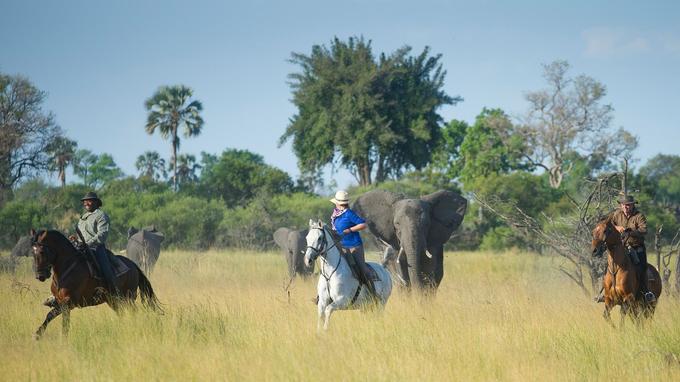 Le cheval, meilleur ami de l'homme pour approcher la faune.