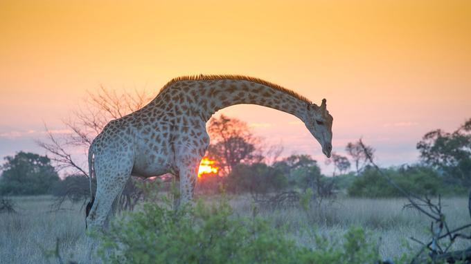 Des scènes sorties tout droit de documentaires animaliers.