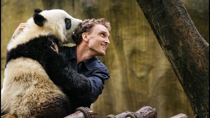 Le docteur Jake Owens compte parmi les chercheurs américains de la Vallée des pandas, près de Chengdu. Par le jeu, il parvient à installer une complicité incroyable avec ces animaux menacés.