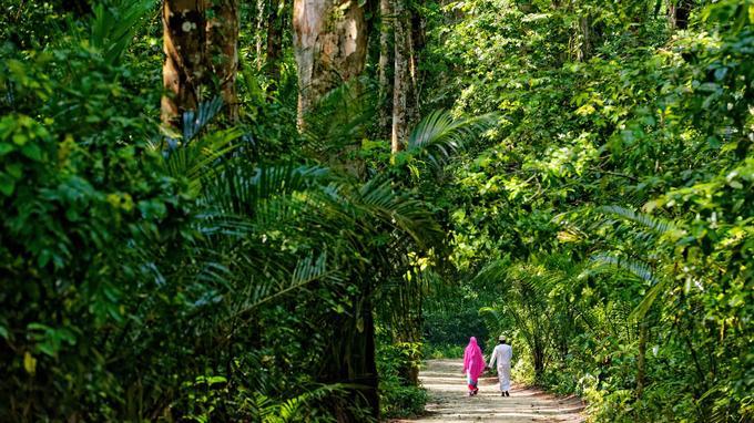 Promenade dans la forêt primaire de Ngezi, espace protégé et paradis des oiseaux.