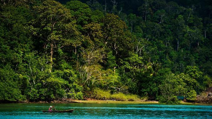 La jungle presque inviolée qui couvre les reliefs abrite une faune parfois unique à l'archipel.