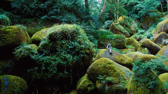 Un des nombreux «visages artistiques» de la France: un bois aux allures de «vallée aux fées».